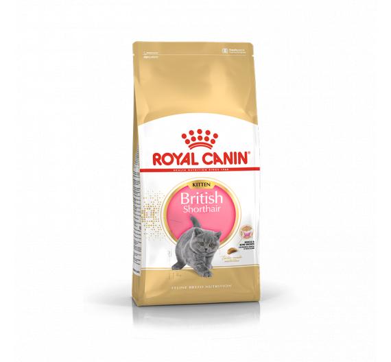 Royal Canin Kitten Brit Shorthair 2kg