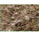 Sisal Υλικό Φωλιάς Βαμβάκι, Βρύα, Λινάτσα 100gr