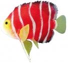 Fantasy Aqua Decor Angelfish