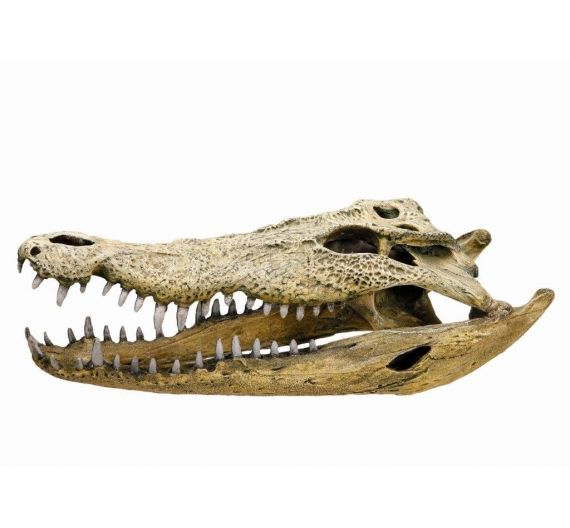 Nobby Aqua Crocodile Scull