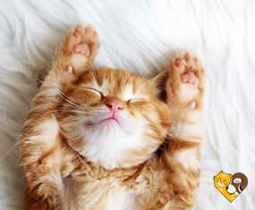 Προϊόντα γάτας online petshop gatoskilo.gr