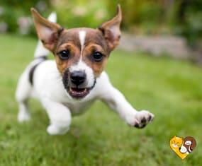 Προϊόντα σκύλου gatoskilo.gr